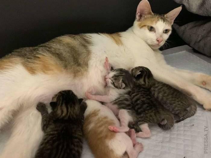 Видеть во сне кошку с котятами: что означает?