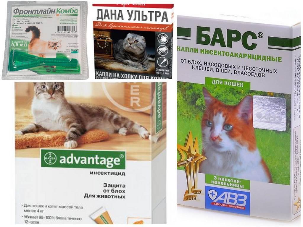 Блохи и клещи у кошек: методы борьбы спецсредствами, народными способами