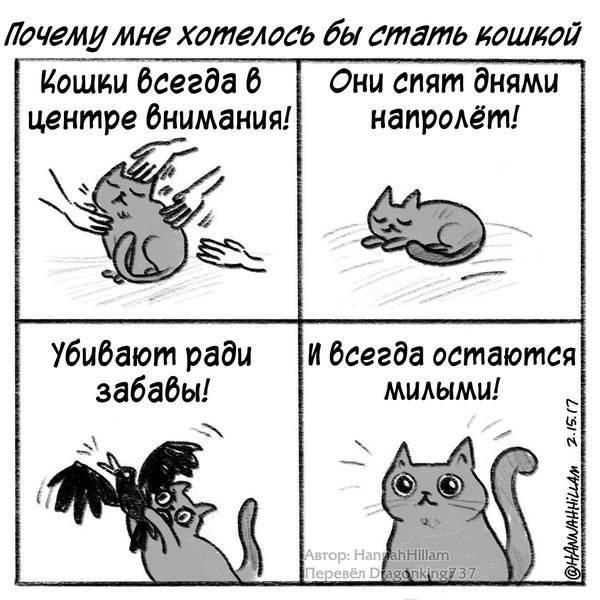 Кошка орет и хочет кота - что делать в домашних условиях