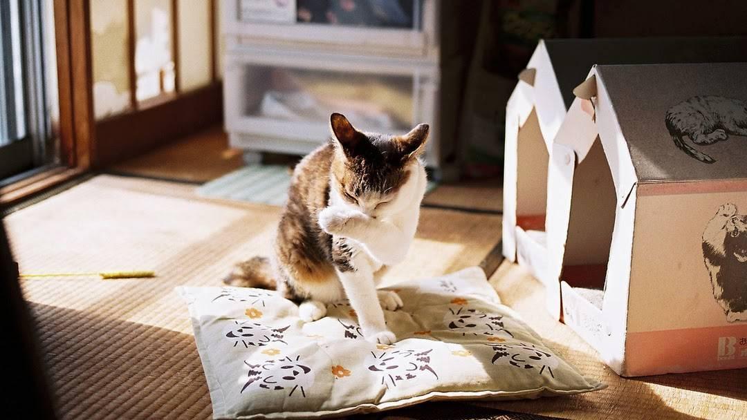 Chto-nuzhno-dlya-kotenka-v-kvartire - запись пользователя ксюня (ksanchik) в сообществе домашние животные в категории помогите советом - babyblog.ru