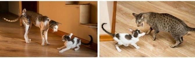 Как отучить кота от сосательного рефлекса – что можно и что нельзя делать?