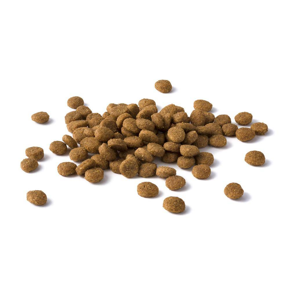 Можно ли размачивать сухой корм для кошек и котов   нужно ли