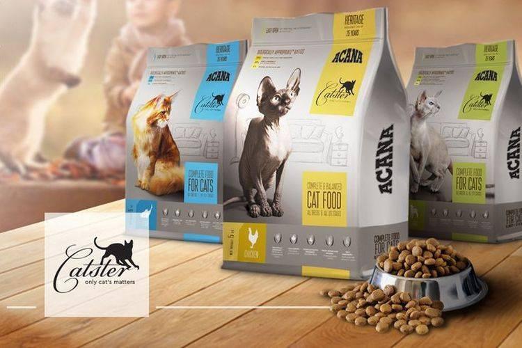 Все о корме для кошек «акана»