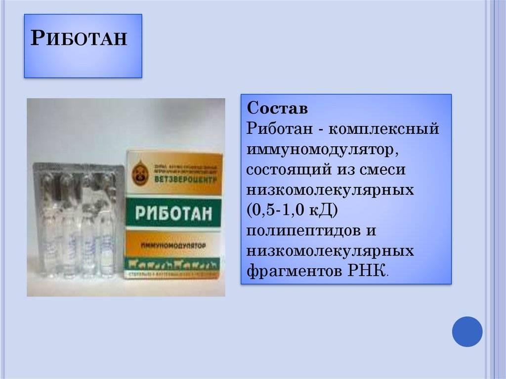 Комплексная терапия для вашей кошки препаратом риботан