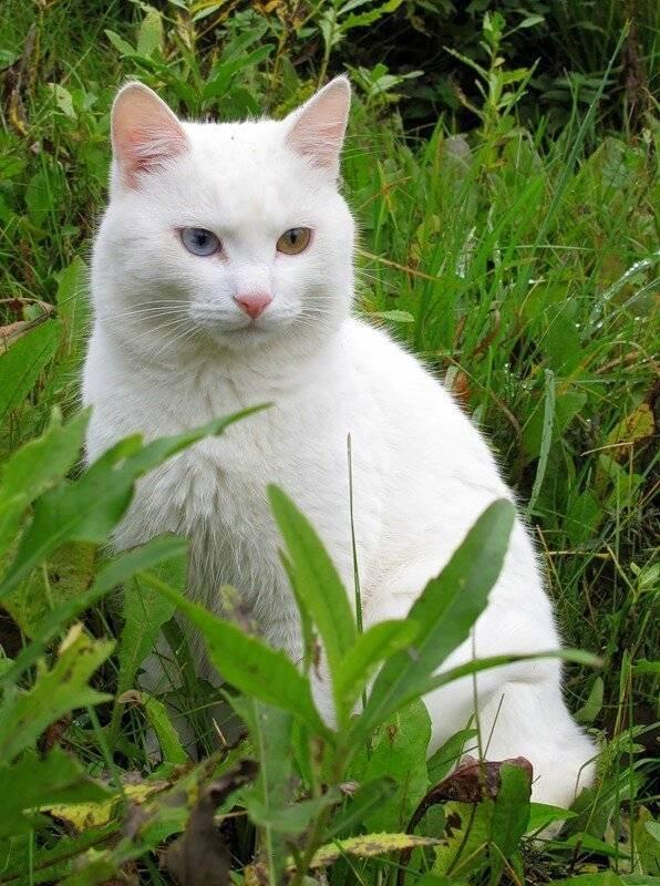 Серо-белый кот (25 фото): породы полосатых кошек серо-белого окраса с голубыми глазами, пушистый серый котенок с белыми пятнами на грудке и лапах