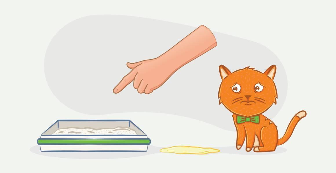 Кот не может сходить в туалет по-маленькому: причины, что делать и как помочь питомцу в домашних условиях