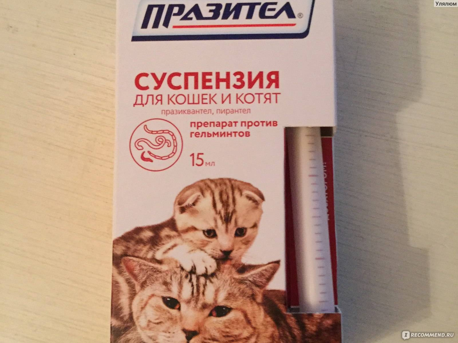 Пирантел для животных инструкция по применению
