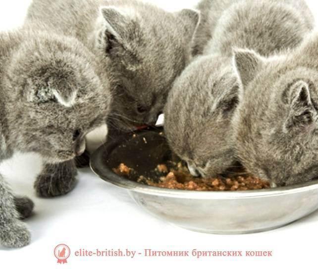 О питании кошек