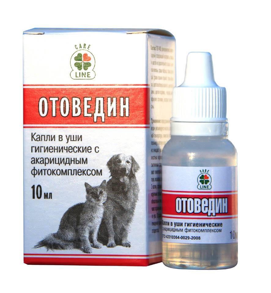 Симптомы ушного клеща у кошек и эффективные методы его лечения в домашних условиях