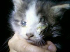 Глисты у кошек - как можно вывести паразитов, самые действенные средства