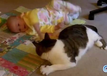 Кошка в доме и женская беременность. почему беременным нельзя гладить кошек и какие угрозы существуют