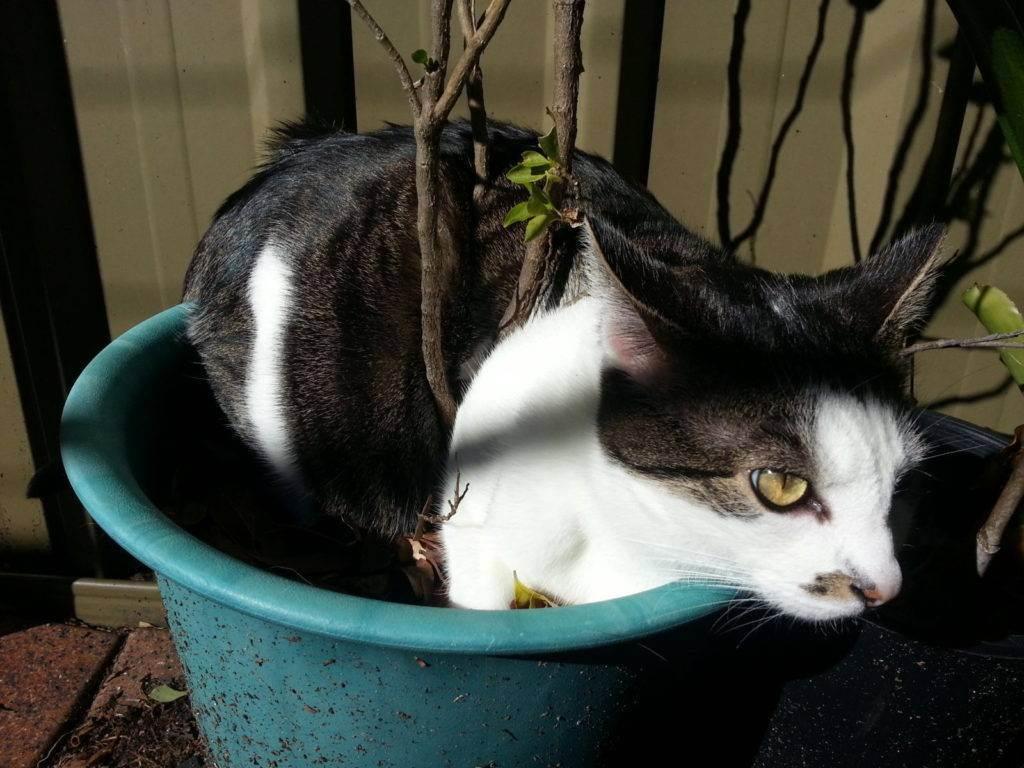 Как можно отучить кота гадить в неположенном месте?