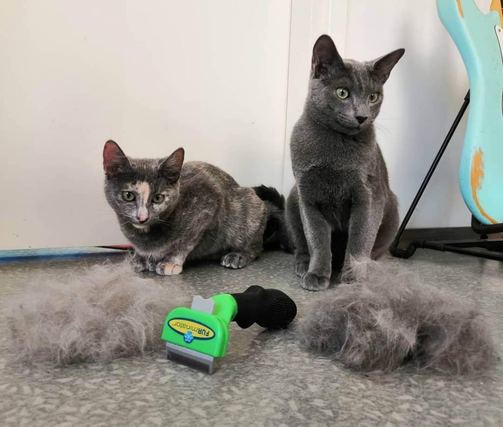 Фурминатор для длинношерстных кошек | отзывы, цена