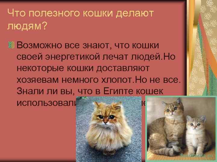 Польза домашних животных для человека
