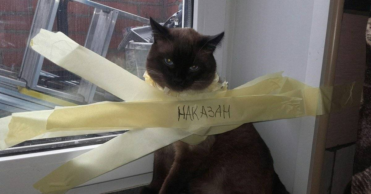 Как наказывать кошку за плохое поведение или за то, что гадит дома?