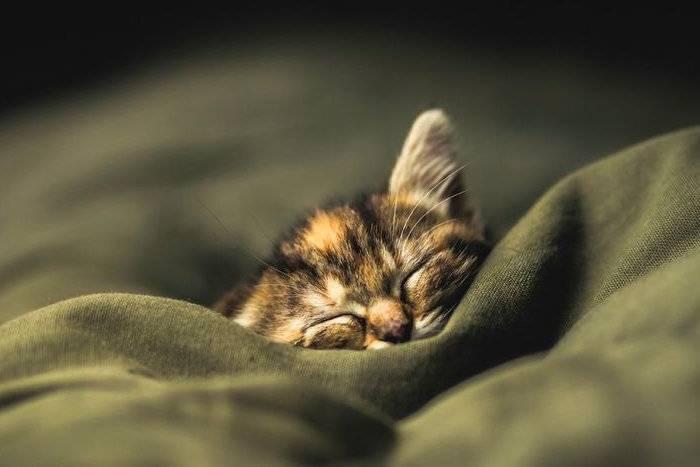 Кот не дает спать
