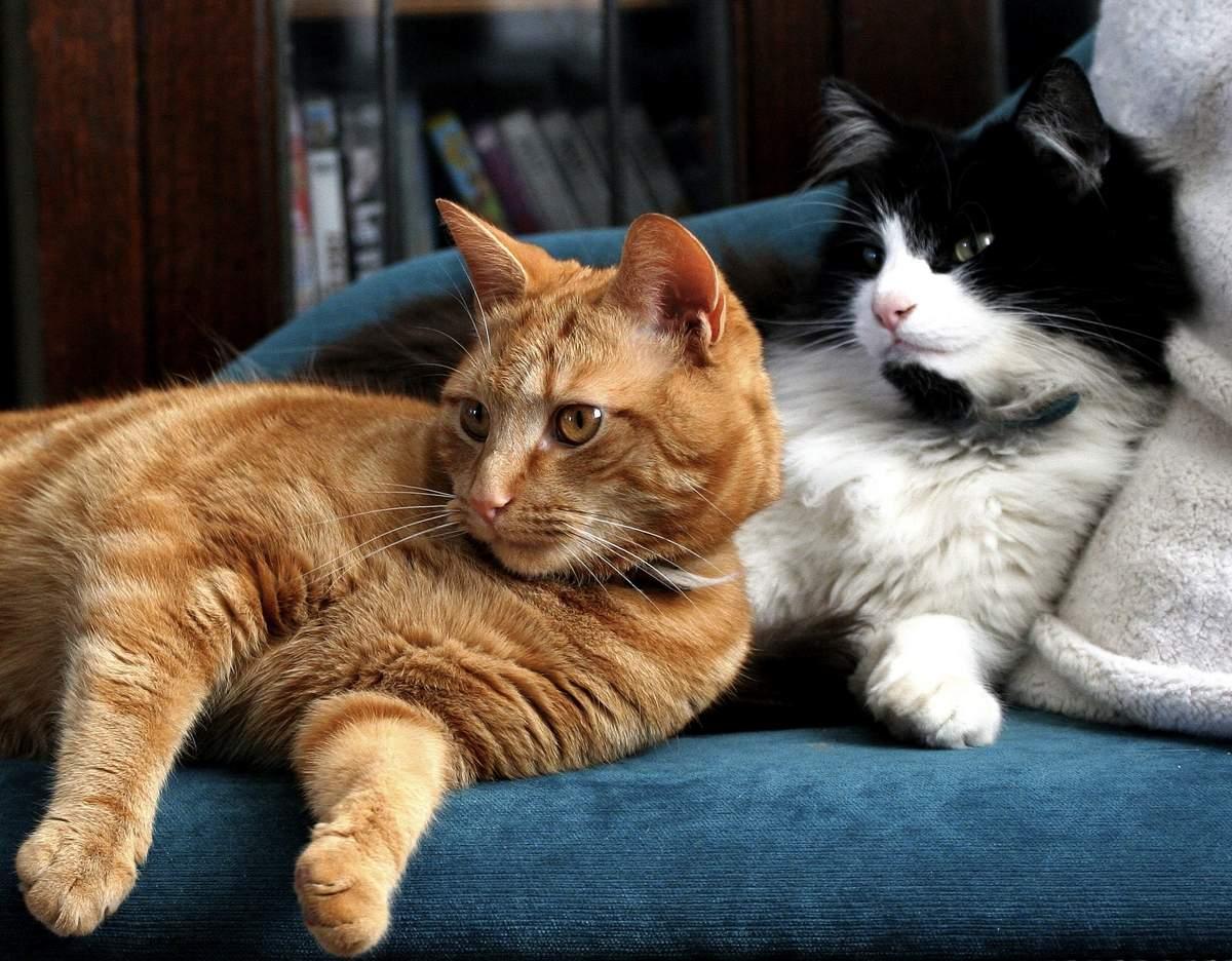 Самые умные породы кошек в мире: фото с названиями и описанием