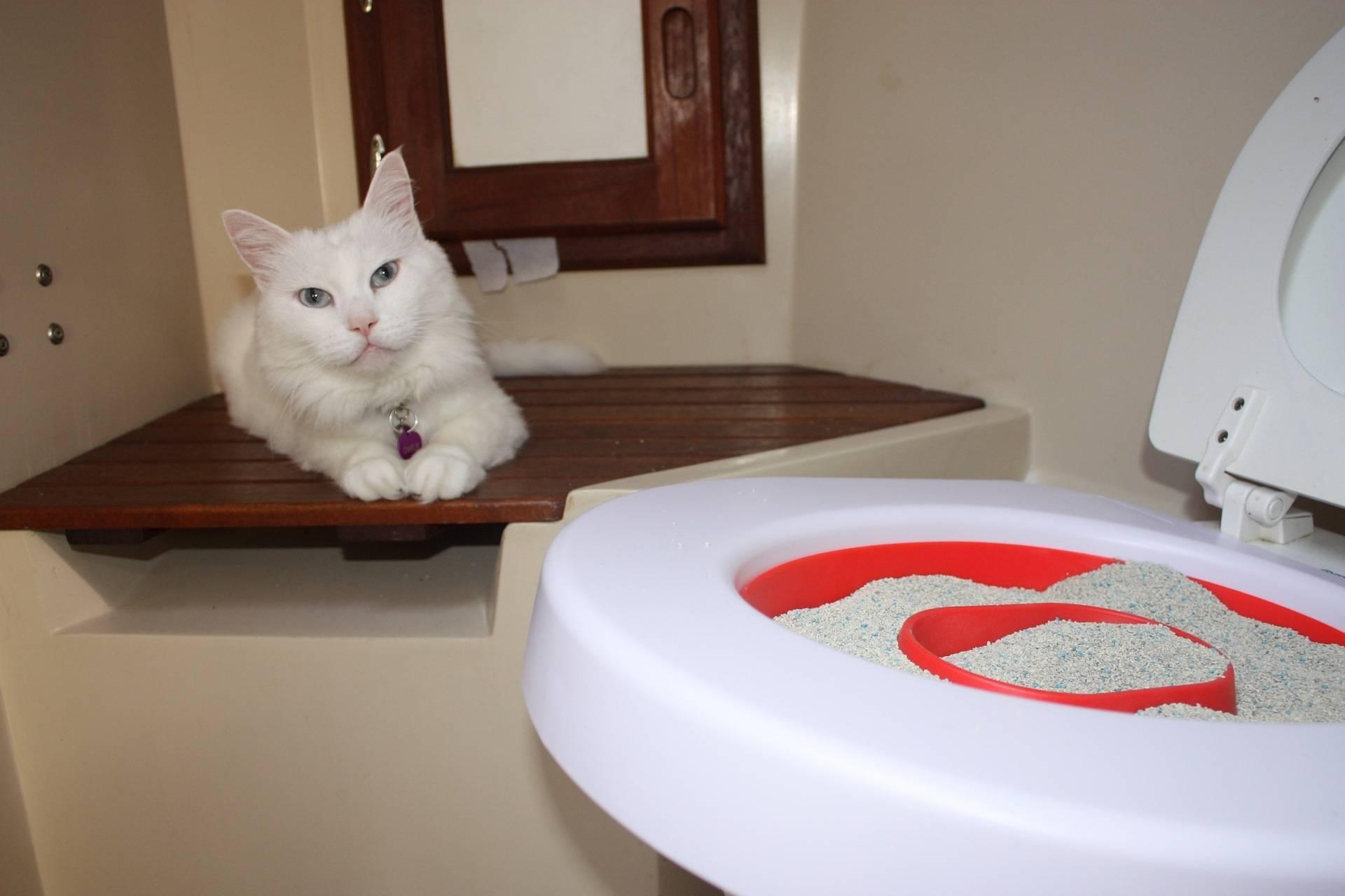 Как кошку приучить к унитазу: видео-инструкция по монтажу своими руками, особенности приучения, приспособлений, систем, лотков, приучателей, цена, фото