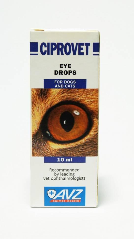Воспаленные глаза у кота чем лечить