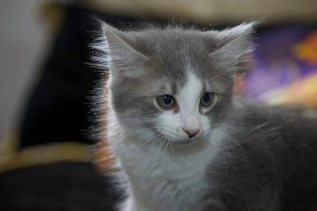 Как назвать черного котенка. клички для котят черного цвета