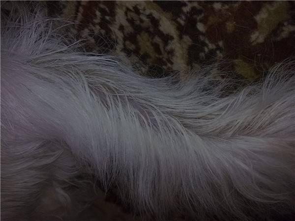 Облысение у кошек: причины, лечение и профилактика облысение у кошек: причины, лечение и профилактика