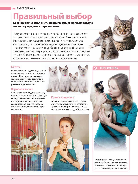 Cтиот ли брать взрослую кошку? - запись пользователя галя))) (galyakoznova) в сообществе домашние животные в категории хотим завести зверушку - babyblog.ru
