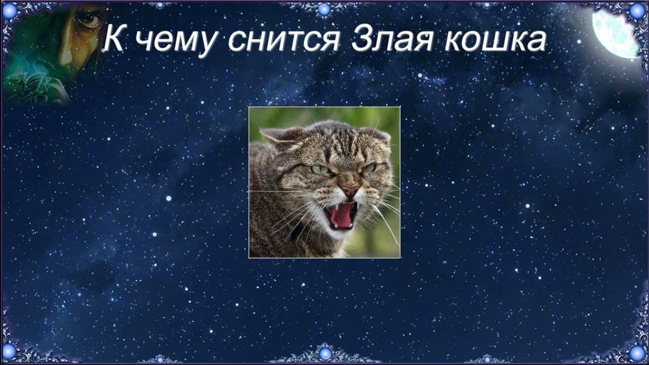Сонник кошка кидается и царапает. к чему снится кошка кидается и царапает видеть во сне - сонник дома солнца