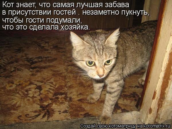 Кошка часто пукает: причины, возможные заболевания, продукты и корма вызывающие газообразование