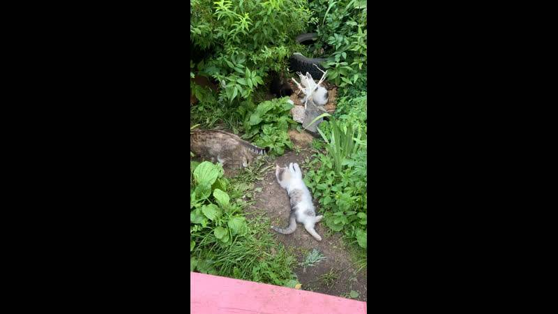 Подобрали котенка: порядок действий от ветеринара