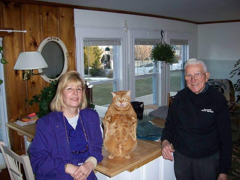 Лечат ли кошки человека от болезней: это правда или миф, как называется такое лечение