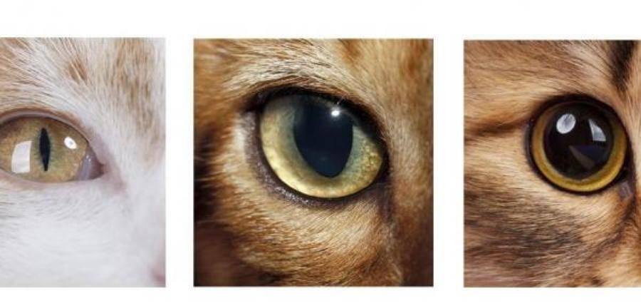 Какие цвета различают кошки и каким они видят мир