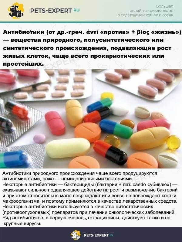 Антибиотики при укусе кошки