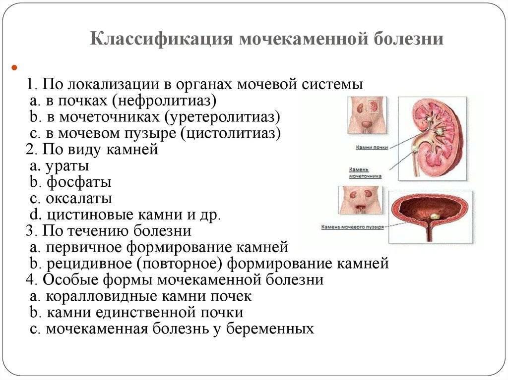 Нефропатия у кошек симптомы и лечение - муркин дом