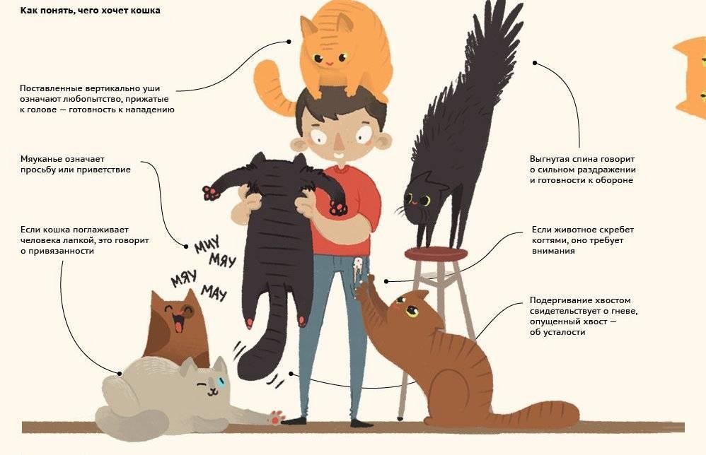 Учимся обниматься у кошек. к чему могут привести объятия с котами
