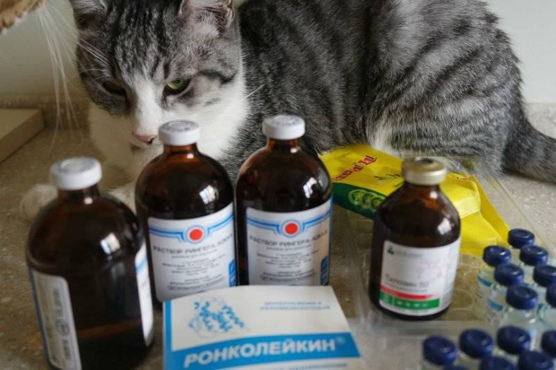 Что делать, если кошка отравилась: чем лечить в домашних условиях, что дать коту при отравлении, чем кормить после, что делать, если кота отравили