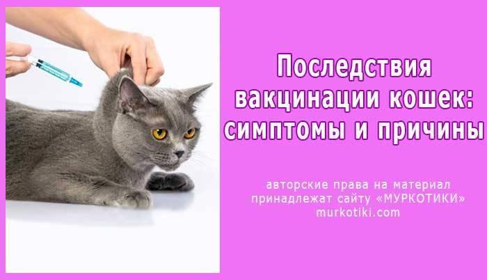 Осложнения у кошек после прививки от бешенства: характерные реакции и методы их устранения