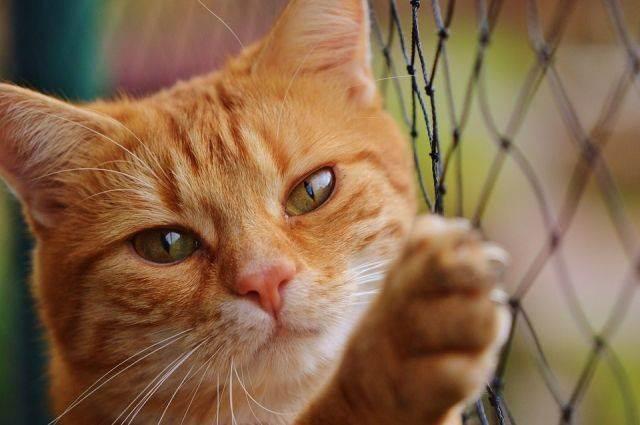 Чипирование кошек и котов: что это такое и для чего