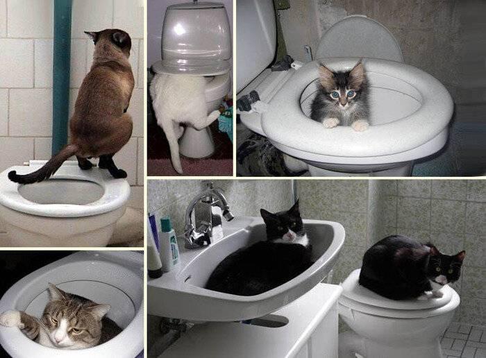 Что делать, если котенок мяукает, когда ходит в туалет?