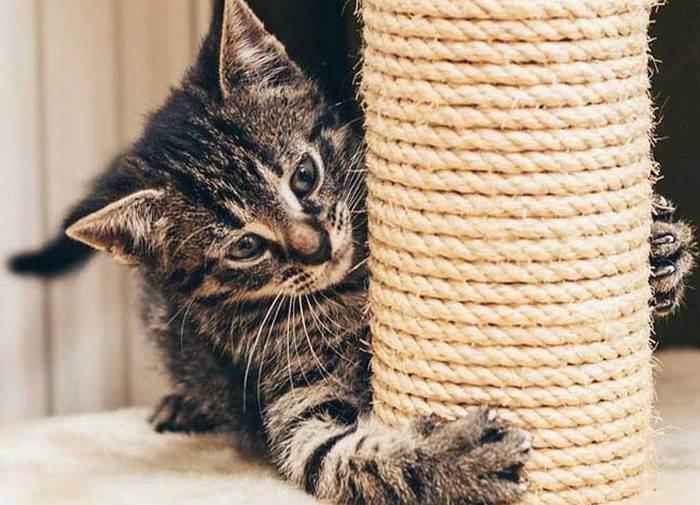 Лайфхаки для кошек и котов – полезности, которые улучшат жизнь взрослых питомцев и котят, упростят заботу о них и облегчат быт хозяев