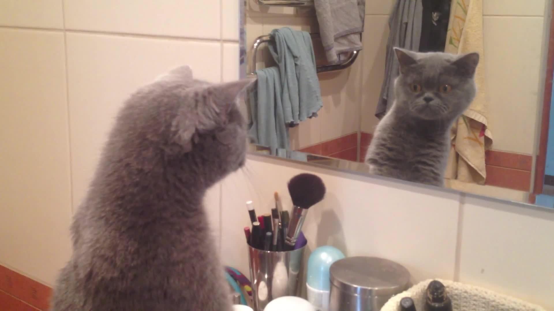 Почему кошки не видят себя в зеркале?