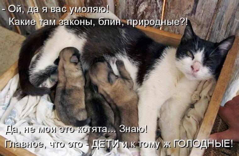 Как приучить кошку спать по ночам?