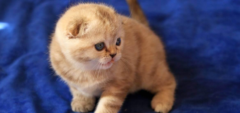 Как узнать пол котенка – 6 способов отличить мальчика от девочки