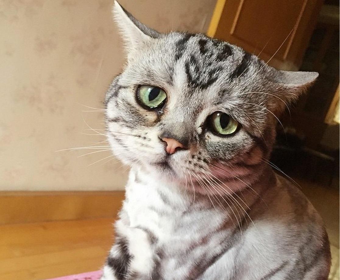 Симптомы стресса у кошек и способы его снятия