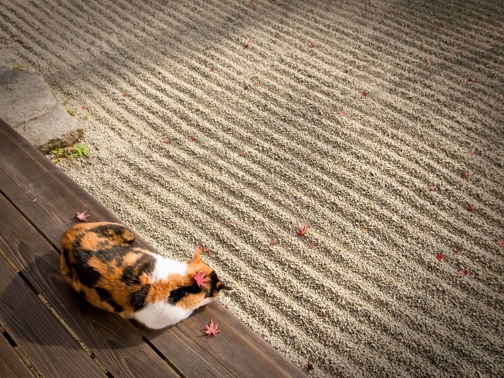 Купание кошек (практические и теоретические аспекты). методика, инструменты. как правильно высушить? оптимальная температура воды?