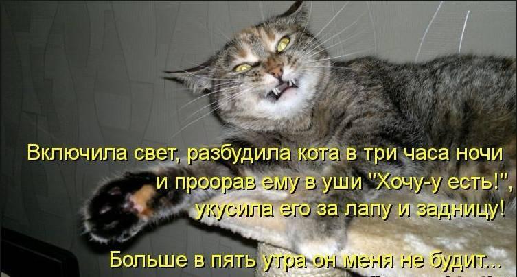 Почему кот орет по ночам в одно и тоже время - кошки и собаки простыми словами