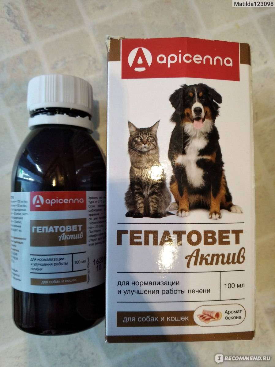 Гепатовет для кошек — инструкция по применению и показания, состав, форма выпуска и цена - для женщин