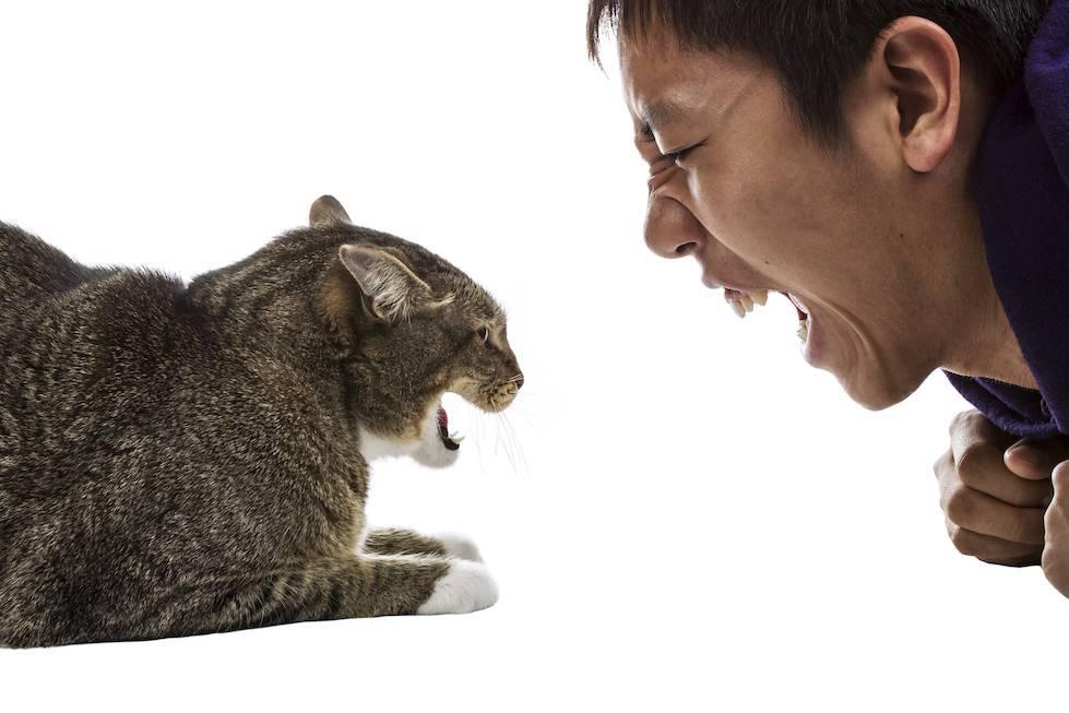 Почему кошка нападает на хозяина?