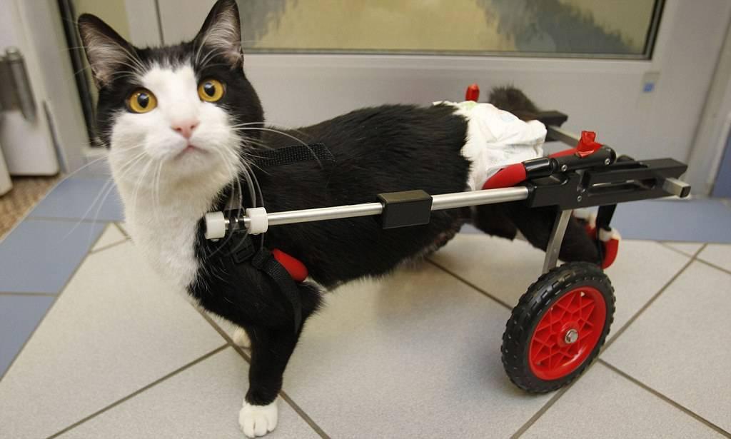 Почему кошка может приседать на задние лапы? | мир кошек что означает, когда кошка приседает на задние лапы? | мир кошек
