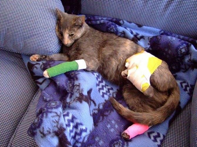 Кошка отравилась крысиным ядом симптомы лечение - муркин дом