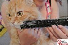 Почему у кота выпадают усы, что делать: причины выпадения вибрисс у кошек